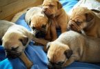 tips for choosing the best puppy