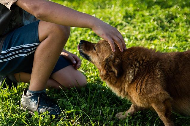 dog rescue adoption tips