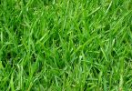 dog is killing my grass