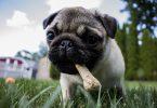 puppy teething training