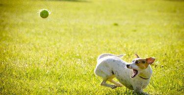 Rawhide Alternatives for Dogs