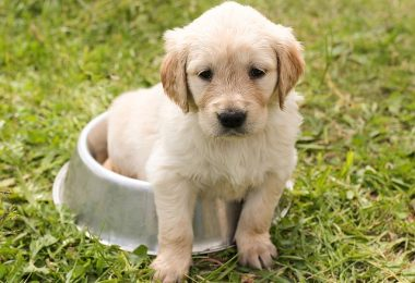 What should I feed my puppy